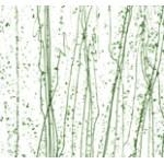Vidro Madri Gras com Verde - Bullseye